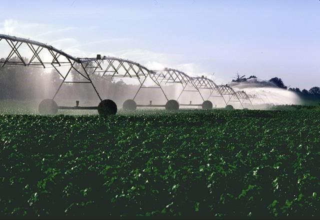 Irrigation du coton